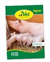 Flyer Schweine, cdVet